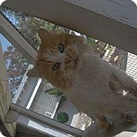 Adopt A Pet :: Michael - El Cajon, CA