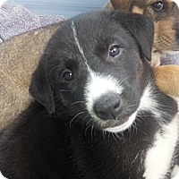 Adopt A Pet :: Daisy - Calgary, AB