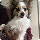 Adopt A Pet :: Jeffery