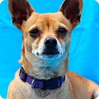 Adopt A Pet :: Zoey - Kempner, TX