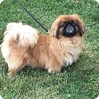 Adopt A Pet :: Phoenix - Sinking Spring, PA