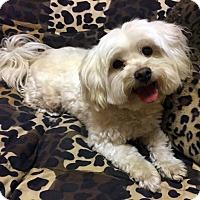 Adopt A Pet :: WAFFLES - Los Angeles, CA