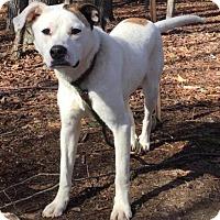 Adopt A Pet :: Molly ($400) - Harrisonburg, VA