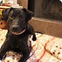 Adopt A Pet :: Ava - Huntsville, AL