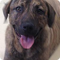 Adopt A Pet :: Angus - EDEN PRAIRIE, MN
