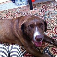 Adopt A Pet :: Lola - Marietta, GA