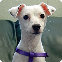 Adopt A Pet :: Dottie - Long Beach, NY