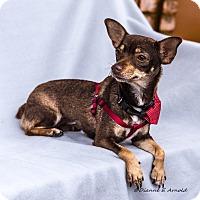 Adopt A Pet :: Jewels - San Marcos, CA