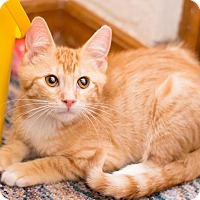 Adopt A Pet :: Gnash - Fountain Hills, AZ