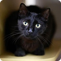 Adopt A Pet :: Solstice - Kettering, OH