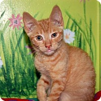 Adopt A Pet :: Kitten ID# 1856 - Lake City, MI