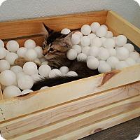 Adopt A Pet :: Jiggs - Yuma, AZ