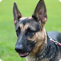 Adopt A Pet :: Lola - Bedminster, NJ