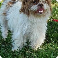 Adopt A Pet :: COCOA - Gustine, CA