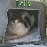Adopt A Pet :: Polly - Pensacola, FL