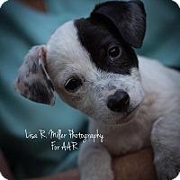 Adopt A Pet :: Ugga - Freeport, FL