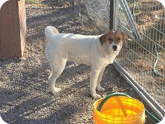 Australian Cattle Dog Mix Dog for adoption in Staunton, Virginia - Vinta
