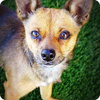 Adopt A Pet :: Bradshaw - Casa Grande, AZ