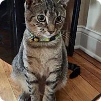 Adopt A Pet :: Green and Pink - Devon, PA
