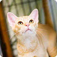 Adopt A Pet :: Arthur 12 - Austin, TX