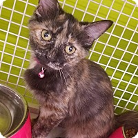 Adopt A Pet :: Peaches - Louisville, KY