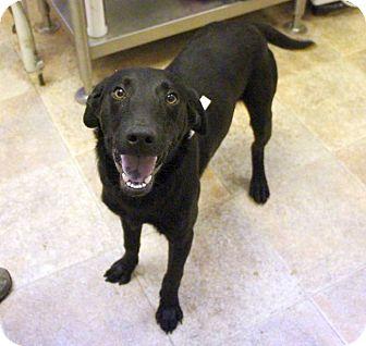 Labrador Retriever Mix Dog for adoption in Cumming, Georgia - Taylor