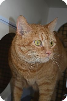 Domestic Shorthair Cat for adoption in Walkersville, Maryland - Minnie