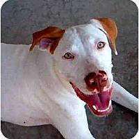 Adopt A Pet :: Chuy - Scottsdale, AZ