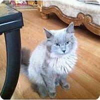 Adopt A Pet :: Frankie - McDonough, GA