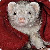 Adopt A Pet :: Sparta - Buxton, ME
