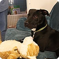 Adopt A Pet :: Starr - Marietta, GA