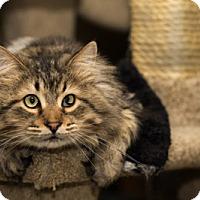 Adopt A Pet :: Paczki - Lombard, IL