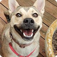 Adopt A Pet :: Benkei - Manassas, VA