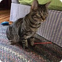 Adopt A Pet :: Tic Tac - McDonough, GA