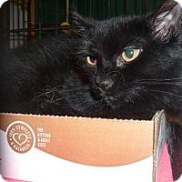 Adopt A Pet :: Sabina - Avon, OH