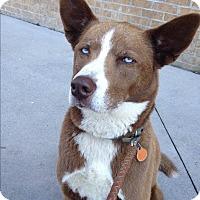 Adopt A Pet :: Gunner - Harrisonburg, VA
