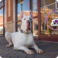 Adopt A Pet :: Radar - Huntersville, NC