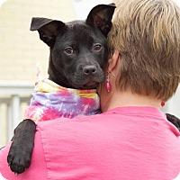 Adopt A Pet :: Stormy - Marietta, GA