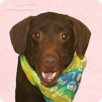 Adopt A Pet :: Bron - Cincinnati, OH