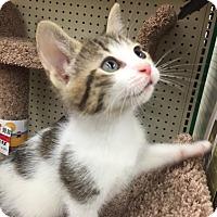 Adopt A Pet :: Adi - Ortonville, MI