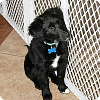 Adopt A Pet :: Gracie - Ogden, UT