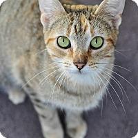 Adopt A Pet :: Peaches - Ortonville, MI