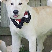 Adopt A Pet :: Evan - Kimberton, PA