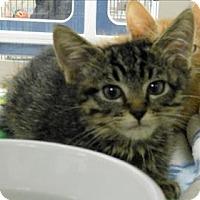 Adopt A Pet :: Harlan - Topeka, KS