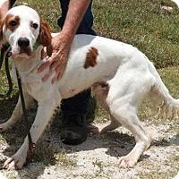 Adopt A Pet :: Malone - Gainesville, FL