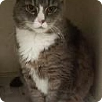 Adopt A Pet :: Thunder - North Haven, CT