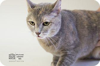 Calico Cat for adoption in Houston, Texas - MITZIE