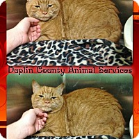 Adopt A Pet :: NEUTERED MALE CAT - Kenansville, NC