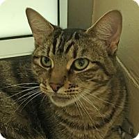 Adopt A Pet :: Magic - Walnut Creek, CA