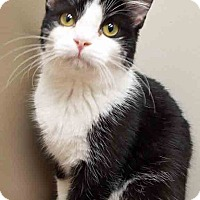 Adopt A Pet :: Sparky - Plainfield, IL